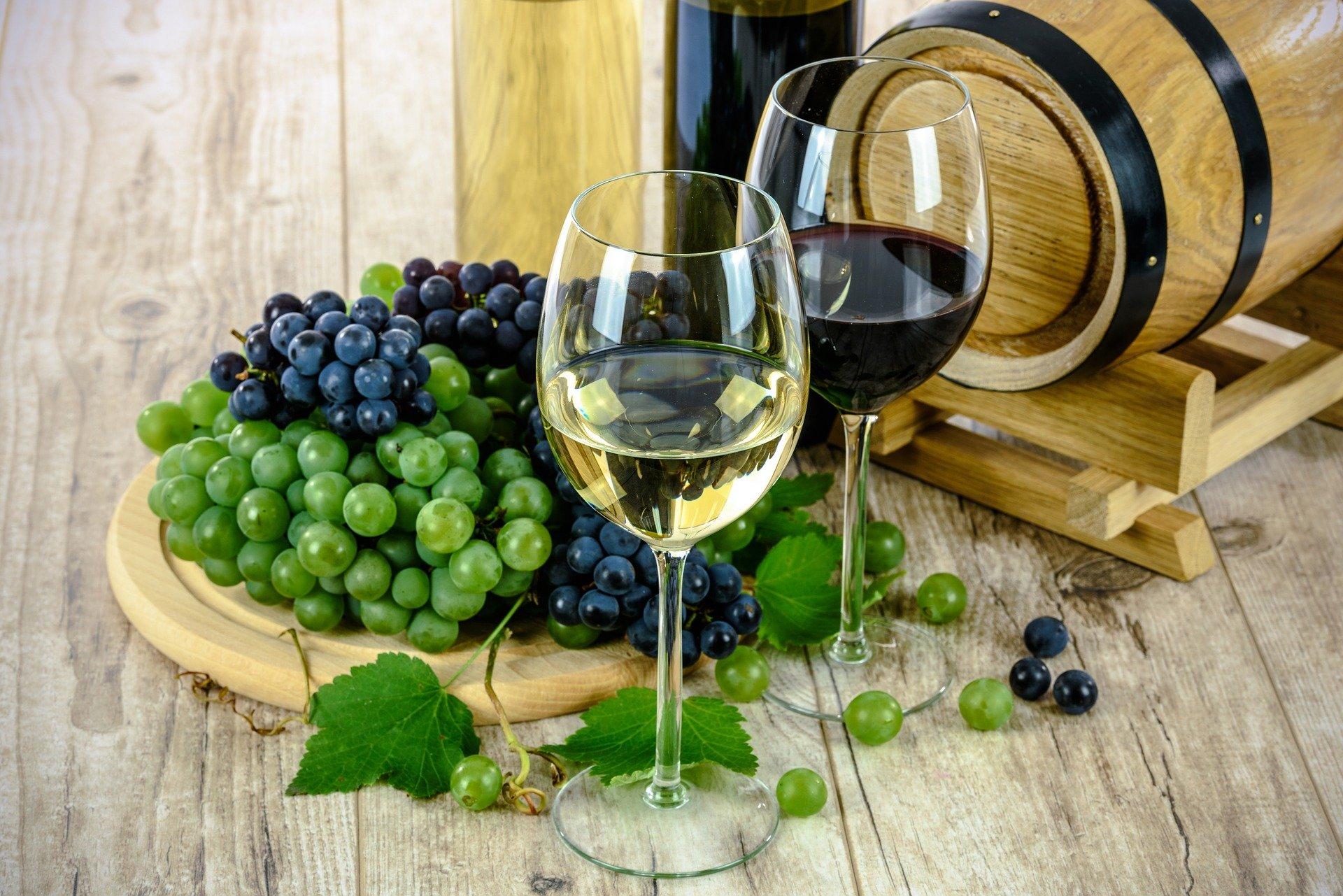 Cycle complet du vin de la vigne aux accords mets et vins